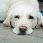 4 สัญญาณที่บอกว่าน้องหมาของคุณเข้าสู่ช่วงสูงวัย!!