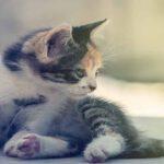 """5 เคล็ดลับในการให้อาหาร """"ลูกแมว"""" เพื่อให้น้องแมวมีสุขภาพดี"""