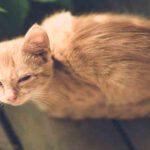 5 สาเหตุที่ทำให้น้องแมวตาแฉะ ทาสแมวควรต้องรู้!!